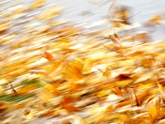 #stockphoto Leaves Wind Stock Photo