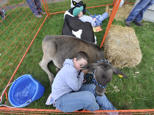 """Owen Beshore, 12, of the York County 4-H club, rests on one of the cows on display in the petting zoo during the """"Go Green in the City"""" event held in downtown York on Saturday, April 23, 2016."""