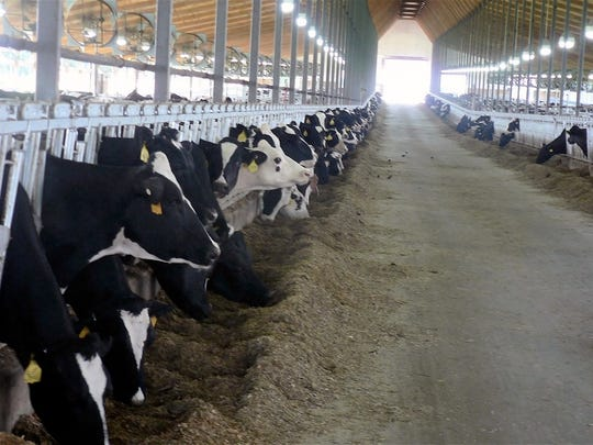 Freestall barns make for cow comfort and more milk.