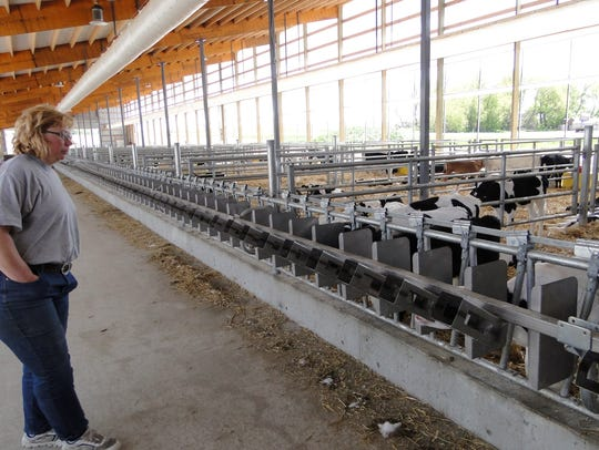 Laura Warmka watches the calves in her new calf barn