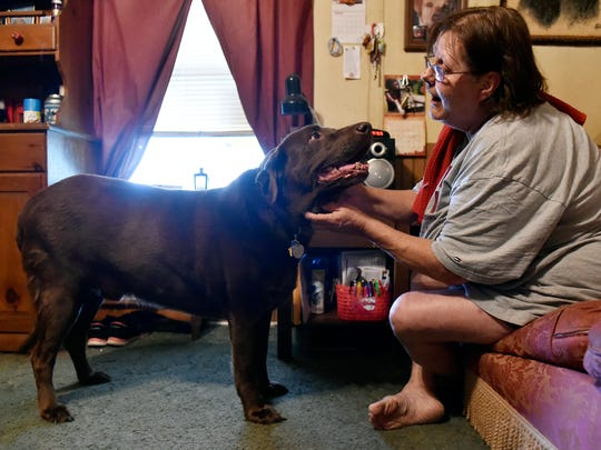 Judy Matthews greets Bo, her boyfriend's chocolate Labrador, in the Dover Township home where she and boyfriend Robert Reichart live. Bo has been registered with the state as a dangerous dog for six years after an incident involving a neighbor. Because Reichart chose not to euthanize Bo, Reichart has had to pay an annual $500 registration fee, purchase insurance and keep a leash and muzzle on the dog  whenever he goes outside his home or enclosure.