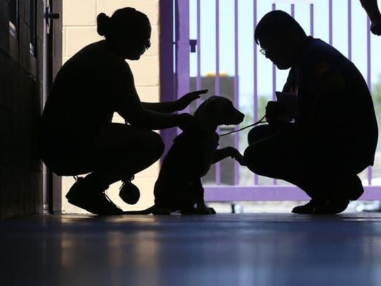 Visitors meet dogs at El Paso Animal Services during a May pet adoption program.