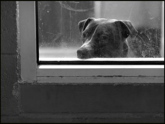Cinco-de-Mayo-Pet-Adoptions-15.jpg