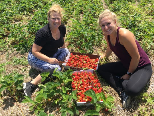 Sherri Lorenz, 49 (left) and daughter Abbey Lorenz, 20, of Woodhaven picked two containers of strawberries at Rowe's Produce Farm in Ypsilanti.