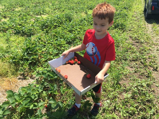 Michigan strawberry season arrives. Where to pick-your-own