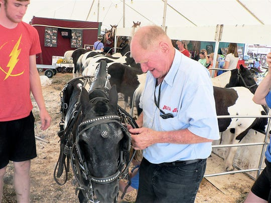 "John Schottler, Somerset harnesses the ponies for a 'MILK BUDS"" show in the arena."