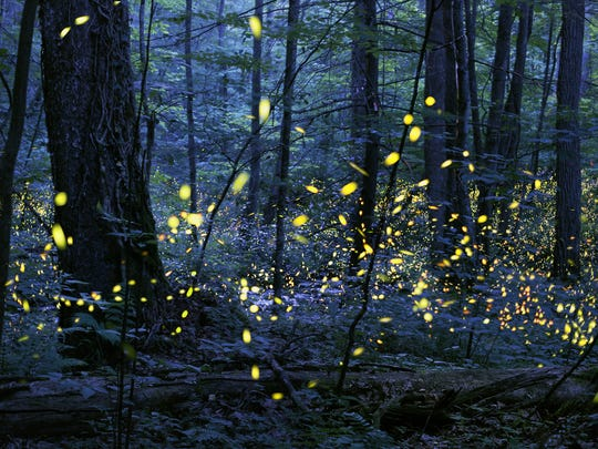 Radim Schreiber of Fairfield won a Smithsonian Photo Contest prize for this composite image of fireflies in Tennessee's Great Smoky Mountains National Park.