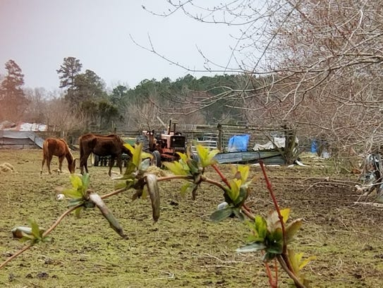 Horses at the farm where on March 16 over two dozen