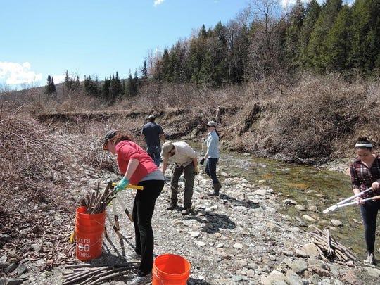 Mad Dog River Restoration