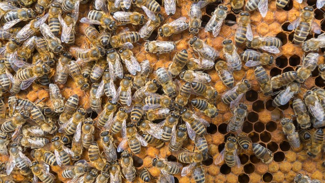U.S. beekeepers reported they lost 33% of their honey bee colonies over the past year.