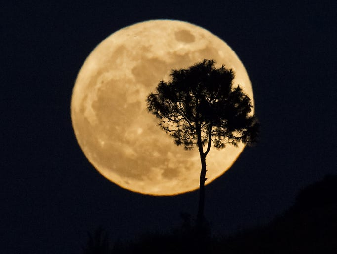A tree is silhouetted as a supermoon rises over Heho,