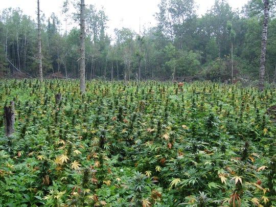 pot forest