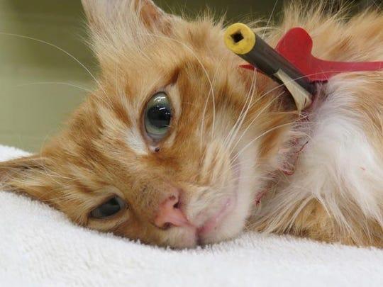 062513 xena arrow cat 2