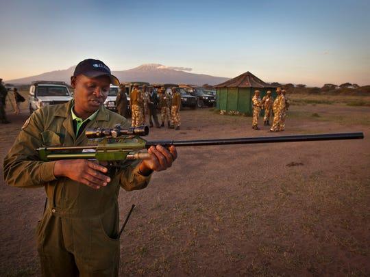 tanzania elephants gun