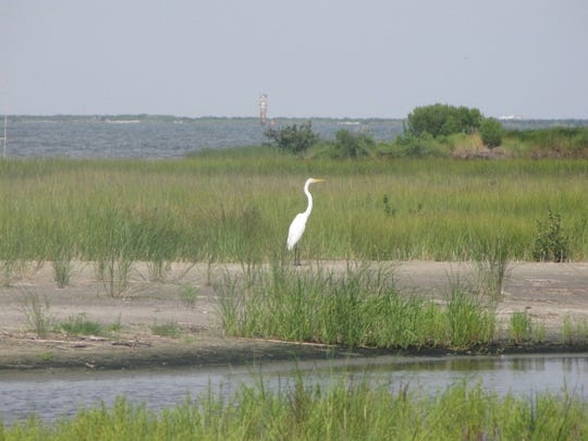 A crane stands amid the sinking dune grass