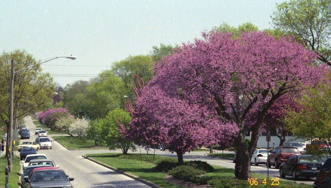 Project GREEN's first community beautification project in 1968. Designed by Gretchen Harshbarger and implemented by volunteers in cooperation with the City of Iowa City. Photo taken in 2006, looking East from Gilbert Street.