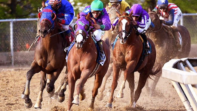 California Chrome had a short lead coming out of the far turn in last year's Preakness Stakes. Pimlico's track might not be as wide as Churchill Downs, but its turns are no sharper than in Louisville.
