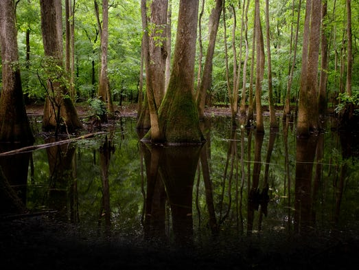 Congaree Swamp South Carolina