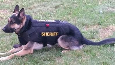 York County Sheriff's Office K-9 Sgt. Hawk.