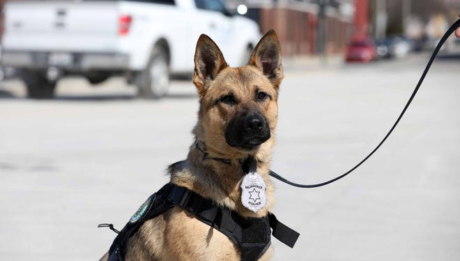 Milwaukee police welcomed two new police dogs, Brewer and Rocker, to the department Thursday.
