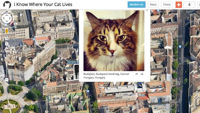 """""""I Know Where Your Cat Lives"""" shows a world map of geo-tagged photos of cats."""