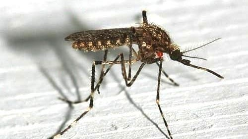 EEE is a rare but serious illness spread by the bite of an infected mosquito. Symptoms can include fever, stiff neck, headache and fatigue. While EEE can infect people of all ages, people under the age of 15 or over the age of 50 are at a particular risk for serious illness.