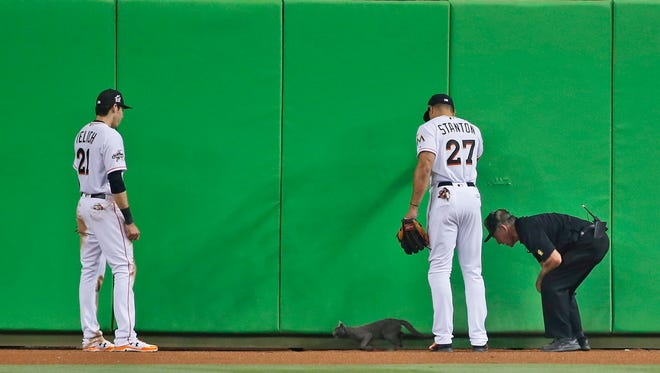 Miami Marlins center fielder Christian Yelich (21) right fielder Giancarlo Stanton (27) and a member of security attempt to remove a cat that wandered onto the field during the fifth inning of a baseball game against the Atlanta Braves, Tuesday, April 11, 2017, in Miami. The Marlins defeated the Braves 8-4.
