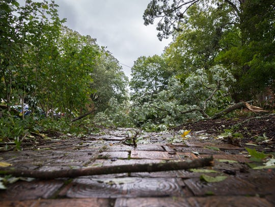 Downed tree limbs on Cumberland Avenue in Asheville,