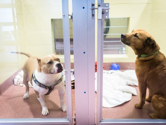 A couple of the adult dogs available for adoption at the Asheville Humane Society off of Brevard Road. Due to being over capacity, the Humane Society is waiving the adoption fees for all animals older than six months to incentivize adoptions.