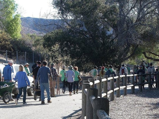 CONTRIBUTED PHOTO/ALTON J. GEBHART More than 100 volunteers showed up at the Ventura Hillsides Conservancy's last tree-planting party in November, where they walked along the Ventura River Parkway to reach the Big Rock Preserve.