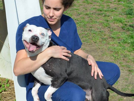 This is how Ophelia, who was used for dogfighting,