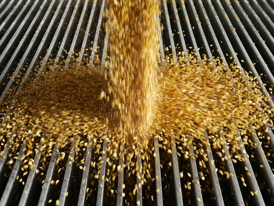 In this Jan. 6, 2015, file photo, corn is delivered