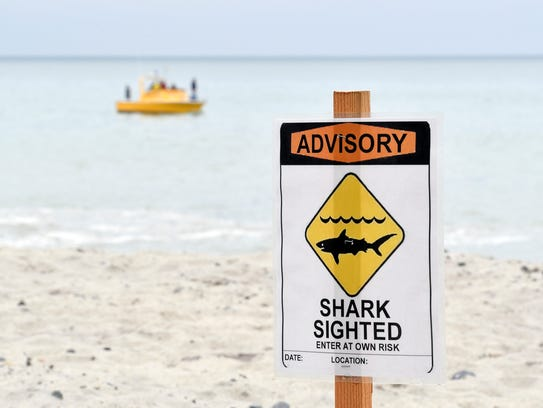 Experts say we need to learn to share the water with sharks.