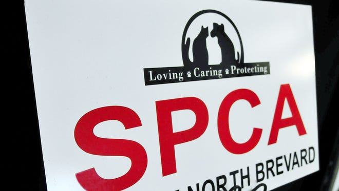 SPCA of North Brevard currently operates a cat adoption store at Melbourne Square mall.