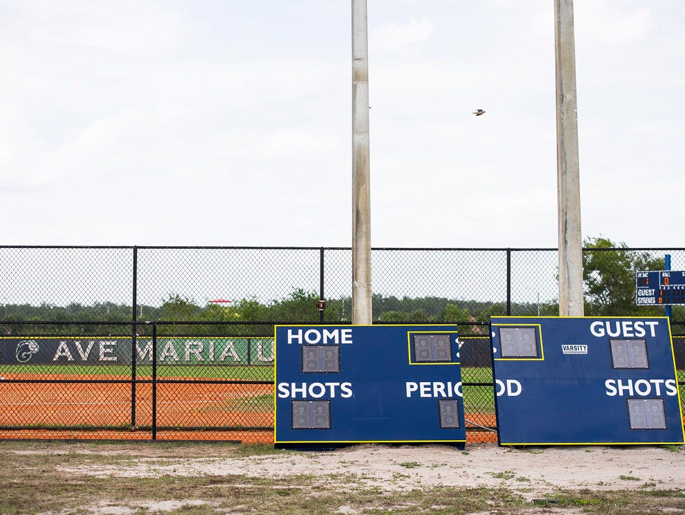 Ave Maria softball