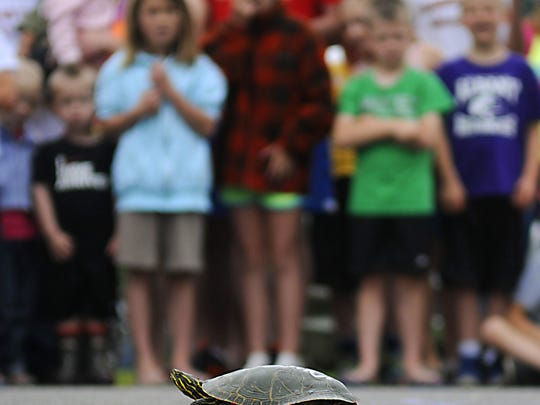 Children wait patiently as their turtles make their