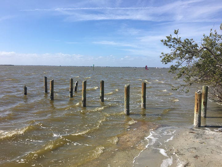 The Indian River Lagoon has suffered from brown tide