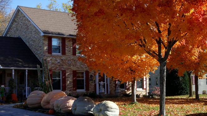 Glen and Margaret Martin's giant pumpkins and squashes sit outside of their house on Tuesday in Combined Locks.