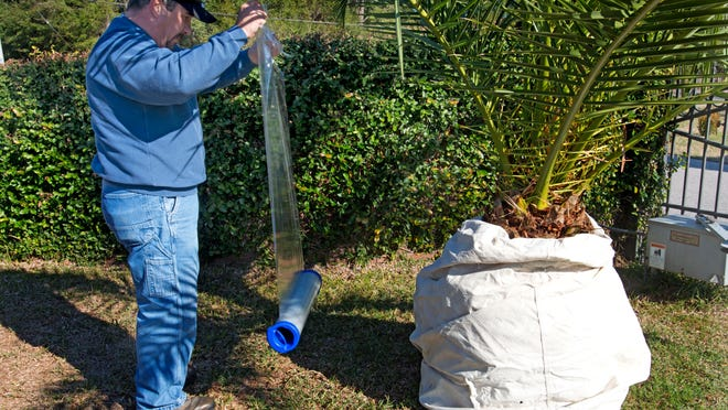 Bret Shiflett wraps cold weather protection around a tropical plant off Bayou Blvd., Wednesday afternoon, in preparation for the near record lows forecast for the area over the next few days.