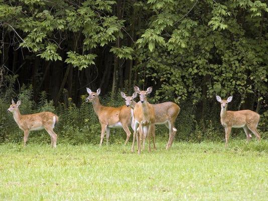 DeerGroup