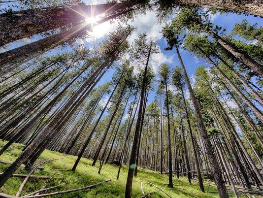 636582880796384779-forest.jpg