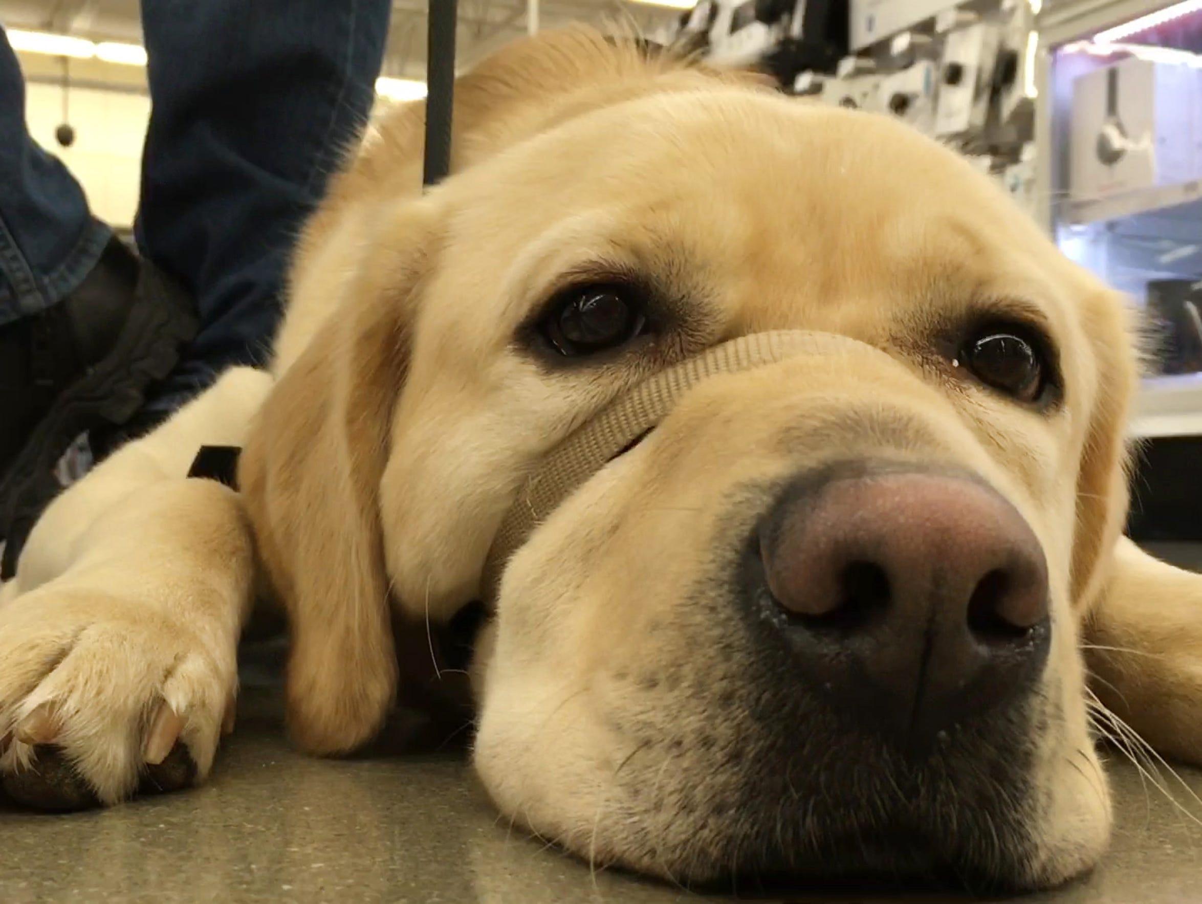 Best Service Dog 636213839169049610 Service Dog 02 Photo