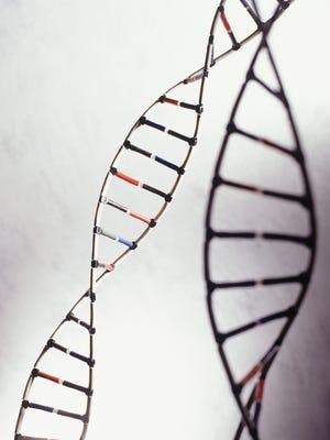 Close-up of DNA models