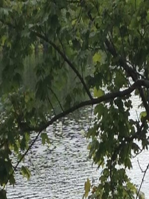 Game Warden divers recover body from Presumpscot River