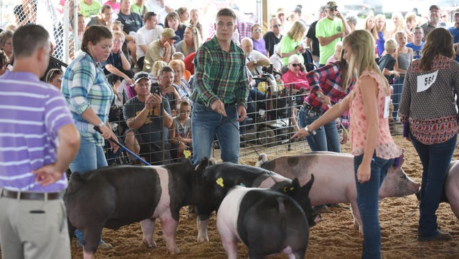4-H members show their hogs during the Muskingum County Junior Fair swine showmanship show on Monday.