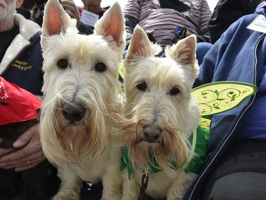 Scottish Terriers Hit The Road In Baileys Harbor For