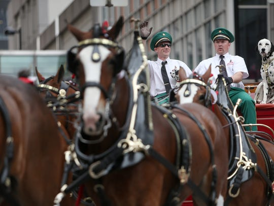 The Budweiser Clydesdales and carriage travel along
