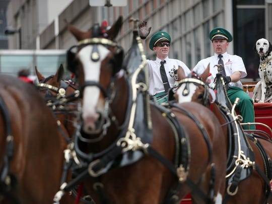 The Budweiser Clydesdales and carriage travel along Fifth Street during the 96th Findlay Market Opening Day Parade.
