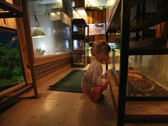 Abrielle Dean, 2 of Lisbon peers into the cage of the colorado king snake at the Cricket Hollow Zoo on Wednesday, Oct. 21, 2015 in Manchester.
