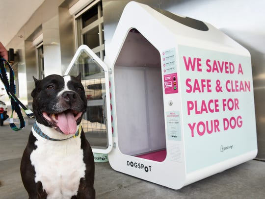 The DogSpot dog houses are part of a movement nationally to create more dog-friendly communities.